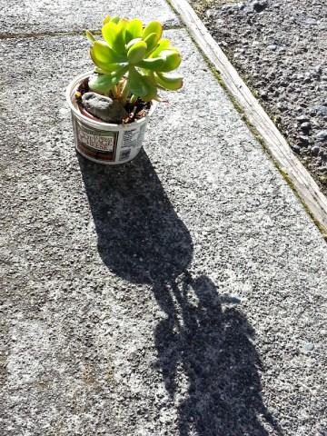 succulent-still-life-1