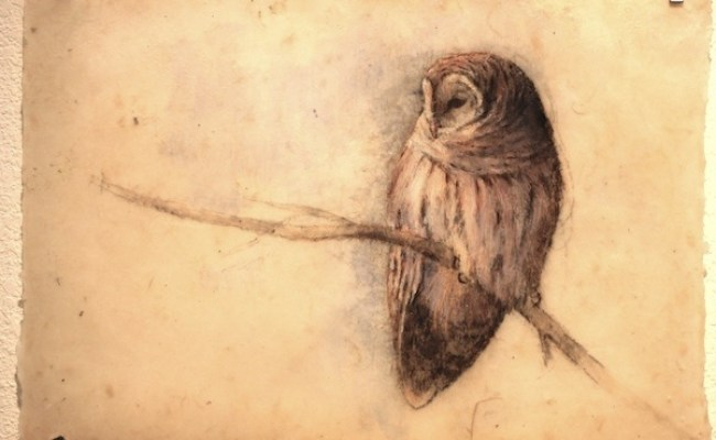 Owl L Lori Mcnee Fine Art Tips