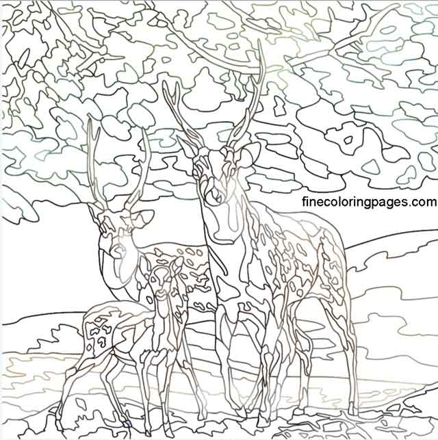 16 Best Free Printable Deer Coloring Pages For Kids
