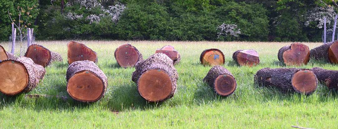 high-quality logs set outside in rows