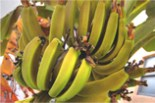 Link to Banana product page and specifications