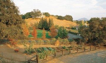 The garden in fall