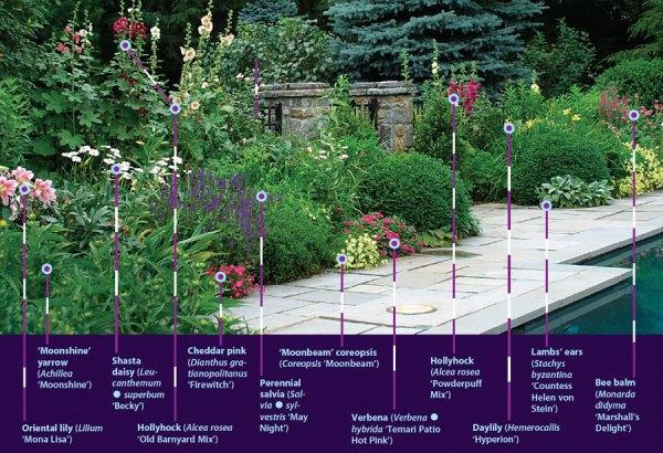 robust summer bloomers - finegardening