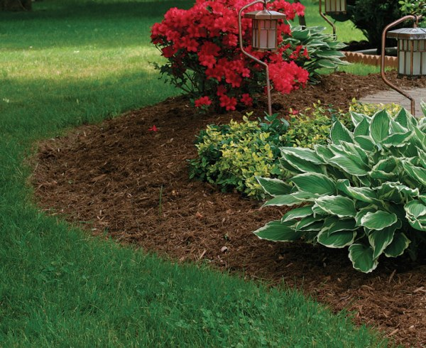 mulch manage soil conditions