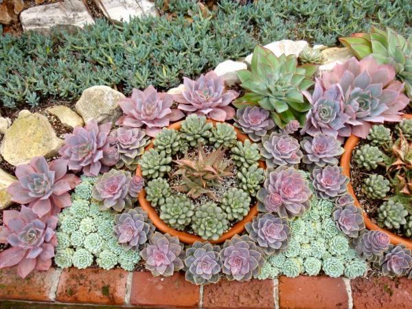 reader gem of succulent