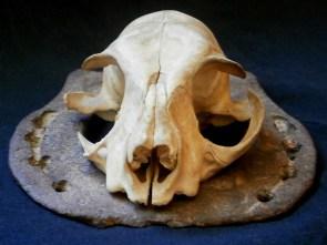 Макро фотография на котешки череп и подкова - авторски снимки от Любомира Попова Fineluart - художник и сюрреалист, които са предназначени за свободно сваляне.