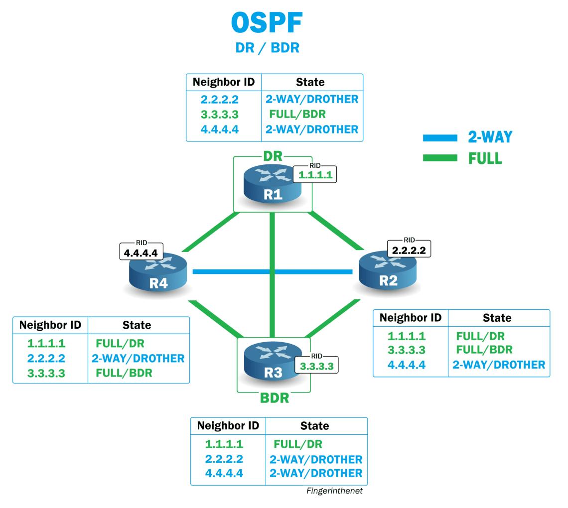 Echanges OSPF