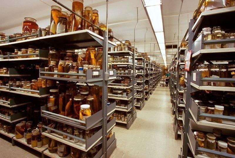 museum storage.jpg