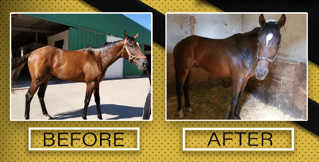 Performance Builder  Finish Line Horse Products Inc