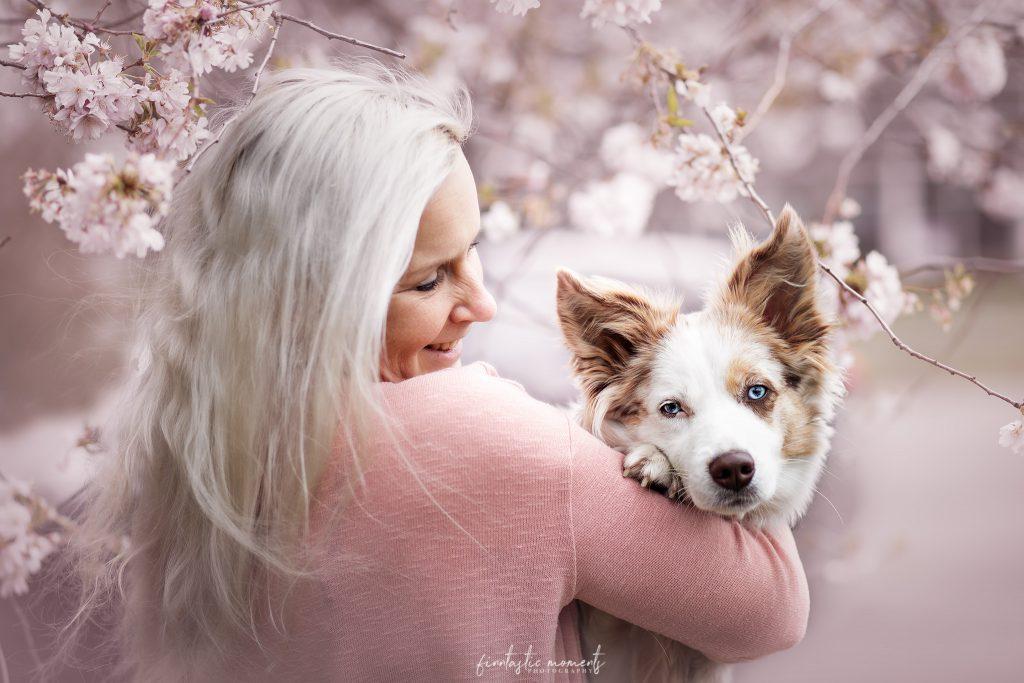 Miniaussie in den Kirschblüten gemeinsam mit Besitzerin