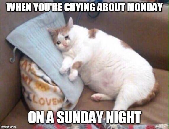 i hate my job meme cat