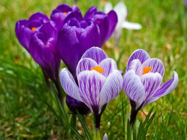 Ajankohtaisia webinaareja kevään aikana