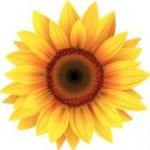 sunflower-large