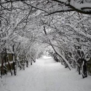 Dukes Head Passage in Bushy Park