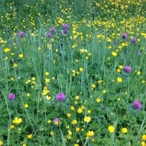 Summer Flowers - Fionnuala Gill