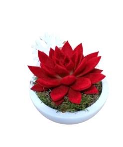 echeveria velluto rosso