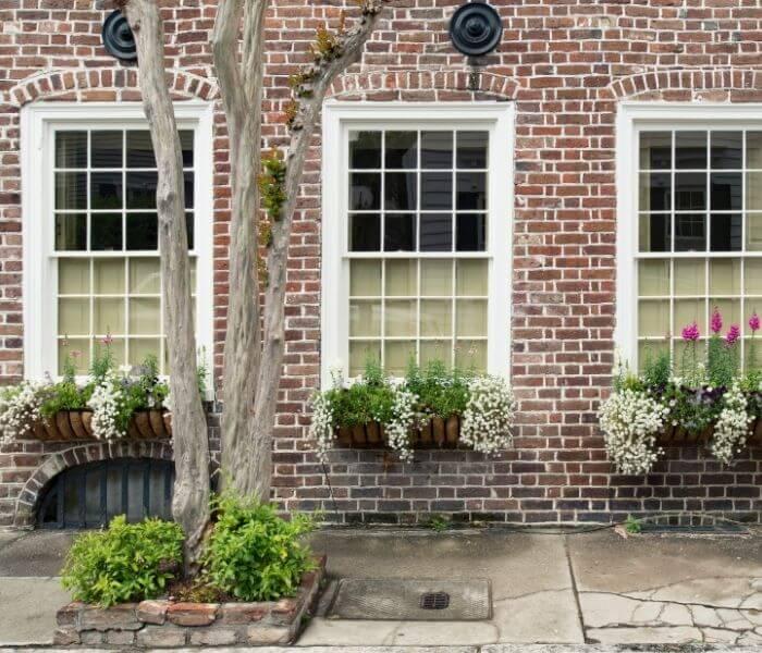 I tendaggi delle finestre, sono fondamentali per filtrare i raggi solari. poichè possono provocare ustioni sulle foglie, causando la morte della pianta.