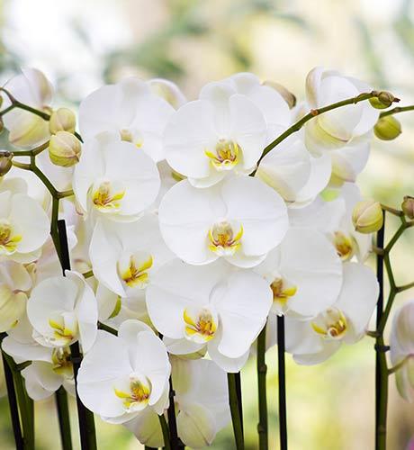 composizioni-fiori