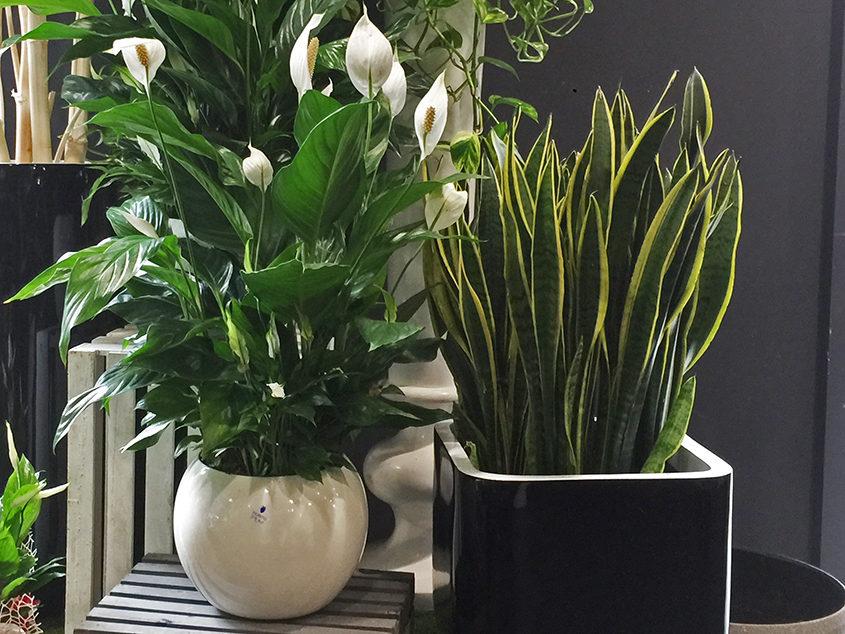 Piante verdi e piante fiorite  Fiorito