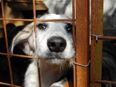 Denúncias de maus-tratos a animais mais que quadruplicam em SP