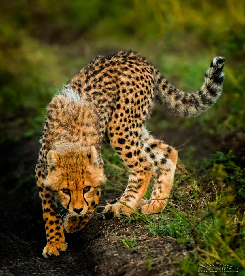 My Kenya Photo Safari: Ten Impressions  (Plus some photos too!)