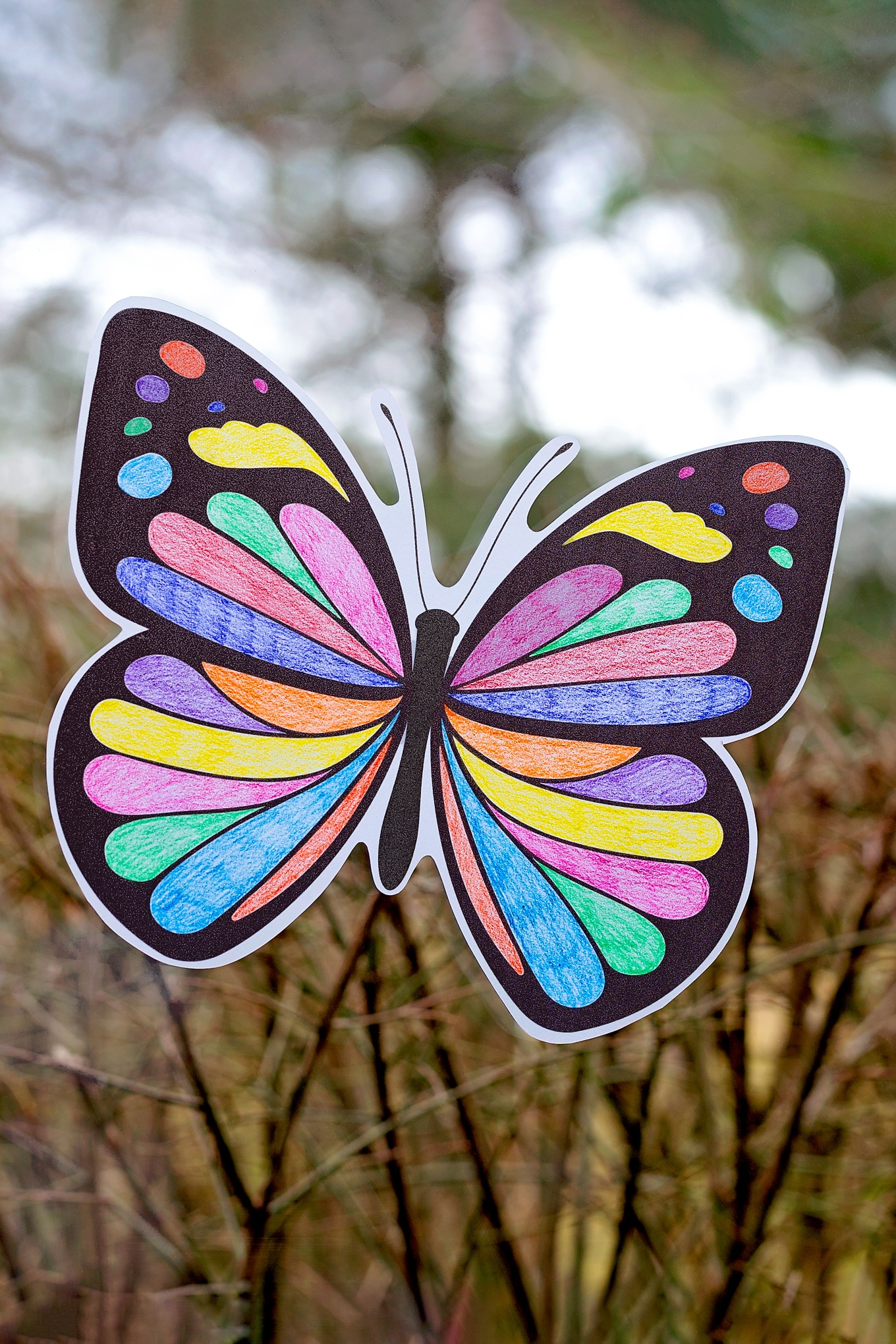 Butterfly Suncatcher Craft