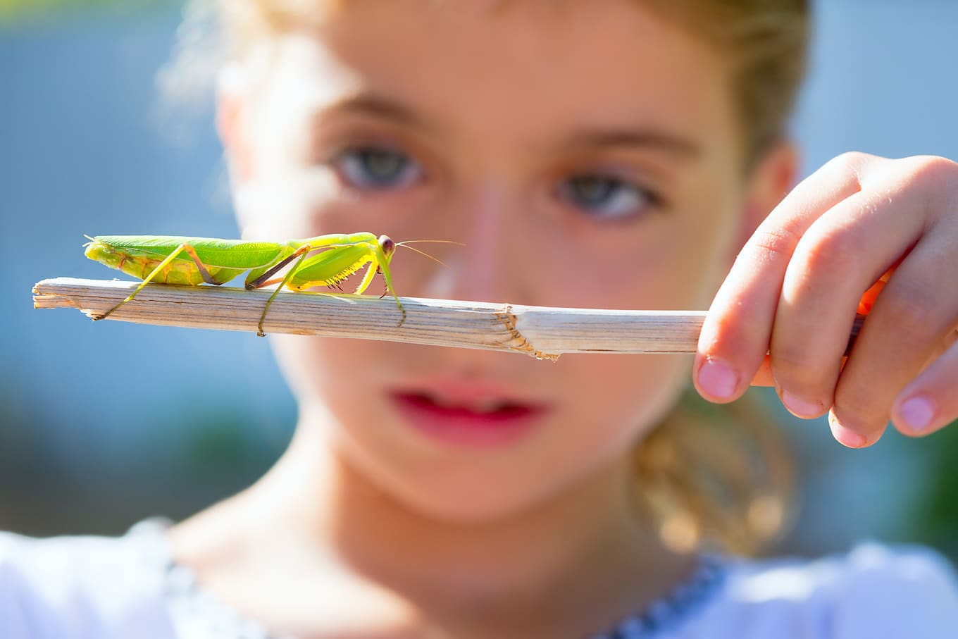 Child Looking at Insect on Nature Walk