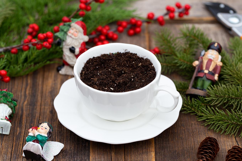 Christmas Teacup Garden In-Process