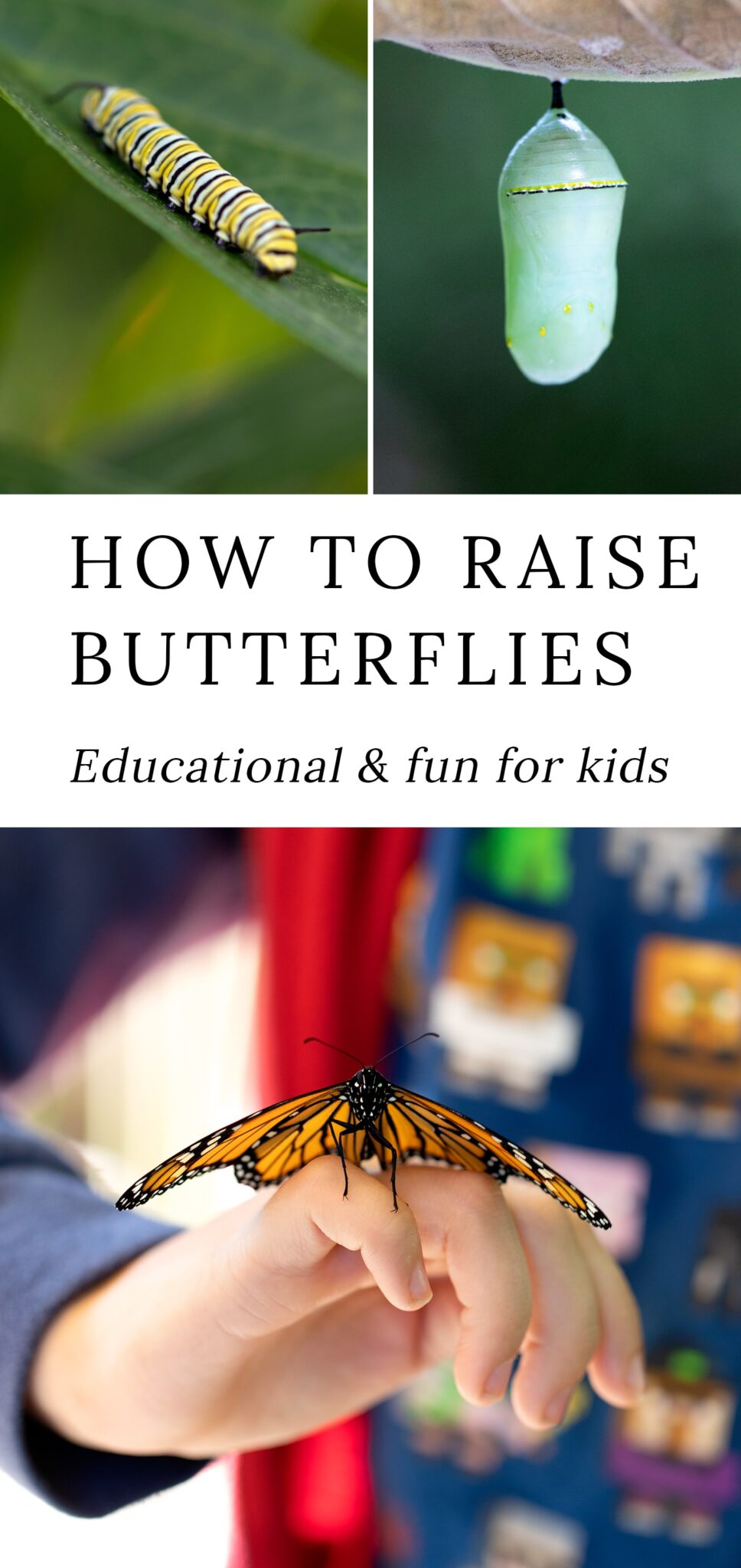 Learning how to raise butterflies, such as black swallowtail and monarch butterflies, is an easy, educational, and fun summer activity for kids of all ages! In this post, learn how to naturally attract butterflies to your backyard, how to set up and maintain a caterpillar habitat, and how to release butterflies back into nature. #raisingbutterflies #butterflies via @firefliesandmudpies