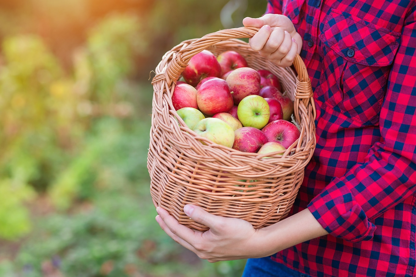 Woman Holding Basket of Apples for Fall Fun