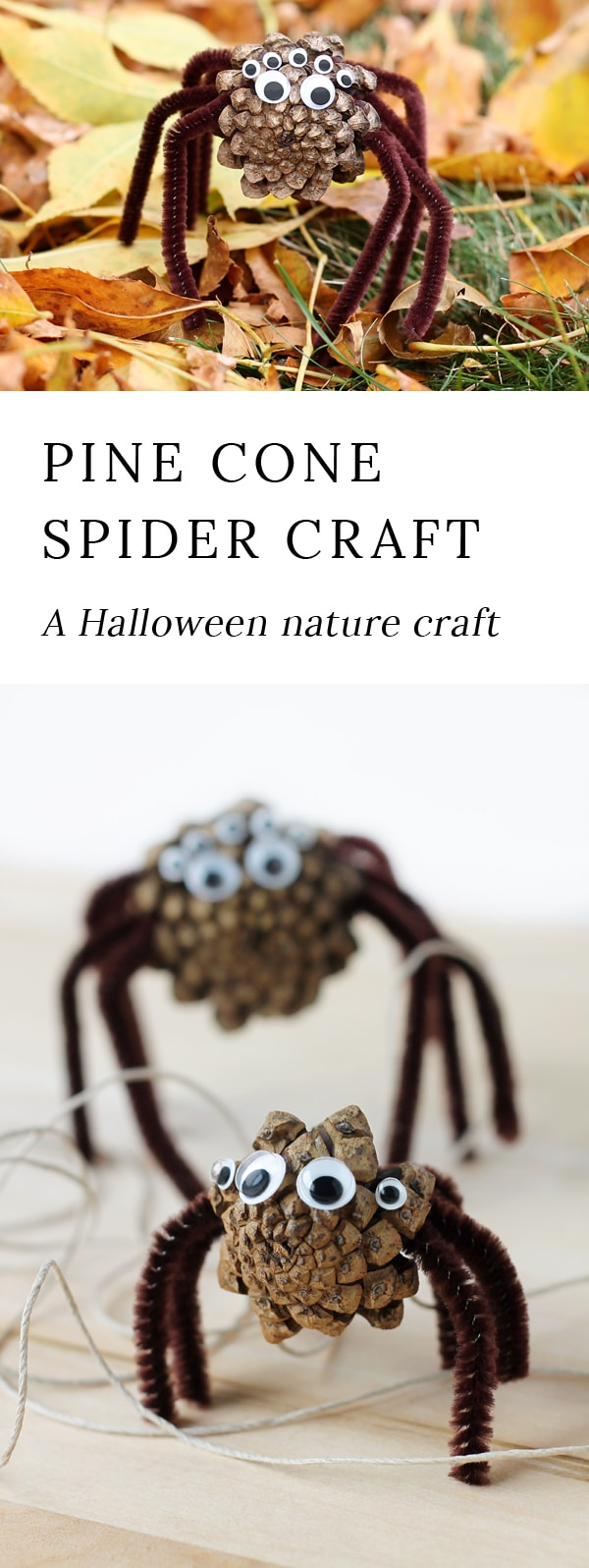 Kids of all ages will enjoy collecting pine cones to create Pine Cone Spiders for Halloween. This creepy-cute nature craft is perfect for home, school, community programs, and camp. #pineconespiders #naturecraft via @firefliesandmudpies
