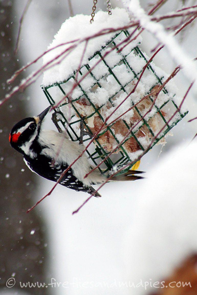 Feed the birds in winter.