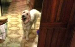Livorno: brucia appartamento, cane avverte i condomini