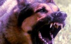 Uomo morde cane per difendere il suo piccolo meticcio aggredito
