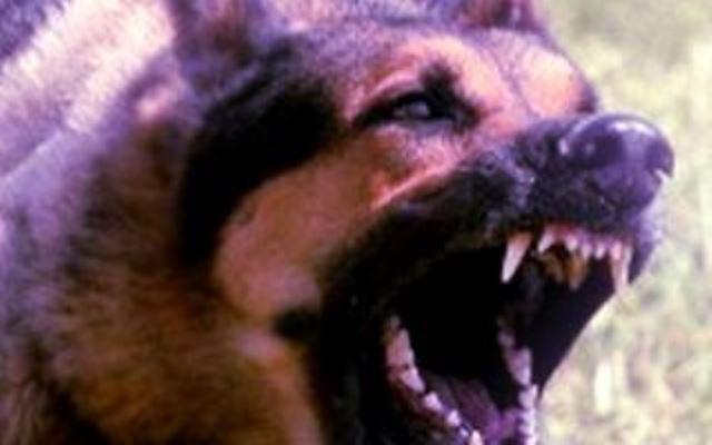Firenze, cane morde al volto bambina di due anni
