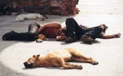 Punkabbestia nel centro di Firenze, controllati 20 cani, 4 denunce