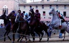 Palio di Siena, Pantera vince la Provaccia