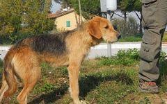 Firenze, pensione per cani: pronta una struttura del comune