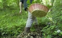 Pistoia: cercatore di funghi precipita in un burrone. Soccorso dopo 7 ore per le difficoltà di raggiungere il luogo dell'incidente