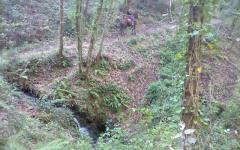 Trovato sano e salvo l'uomo disperso nei boschi del grossetano