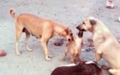 Cani randagi, progetto all'avanguardia