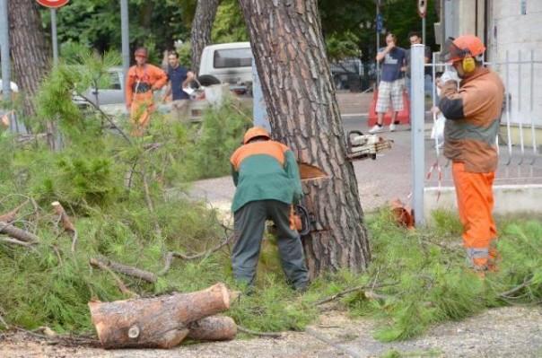 Lavori di riqualificazione degli alberi a Firenze