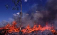 Toscana, allerta incendi estivi: scatta fino al 31 agosto divieto di accendere fuochi