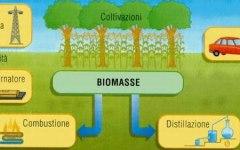 Produrre energia dagli scarti: un incontro sulle biomasse