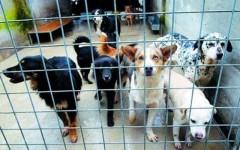 Cani randagi in un canile