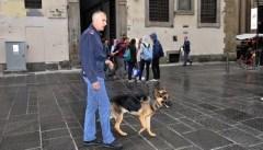 Pando, il cane poliziotto fiorentino