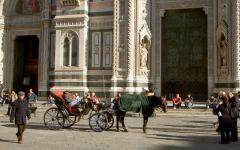 Firenze, il comune protegge i cavalli dei fiaccherai
