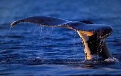 Toscana, dalla Regione 30mila euro per salvare delfini e tartarughe