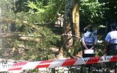 Firenze: albero travolse zia e nipotina di due anni, assolto dipendente del comune