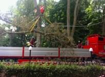 I vigili del Fuoco durante la rimozione del ramo